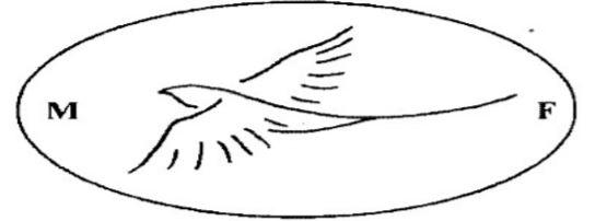 poinçon importateur hanoga.com oiseau en vol